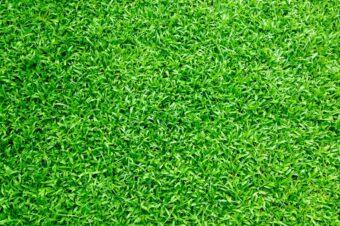 Regeneracja trawnika