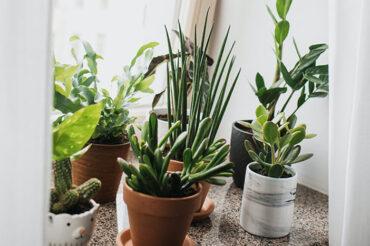 Nawożenie roślin domowych